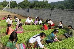 Nâng cao chất lượng bữa ăn bán trú cho học sinh vùng cao Yên Bái