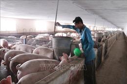 Sửa đổi, hoàn thiện Luật Chăn nuôi cho phù hợp với thực tế