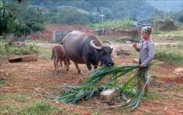 Xã nghèo Tuyên Quang khởi sắc nhờ nguồn vốn Chương trình 135