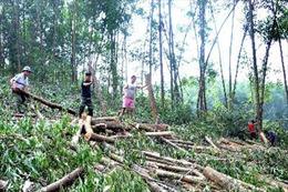 Bắc Giang: Thu hồi và hủy bỏ quyết định cho Công ty Lâm nghiệp Yên Thế thuê đất rừng