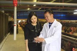 Lão nông nuôi gà bằng công nghệ mới, doanh thu hàng tháng hơn 8 tỷ đồng