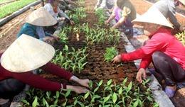 Giải quyết lương và thưởng Tết cho Công nhân Công ty chăn nuôi Bình Hà