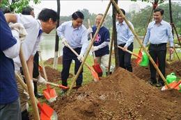Trồng thêm nhiều cây hoa anh đào tại Công viên Hòa Bình