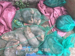 Giảm các vi phạm liên quan đến động vật hoang dã ở Hà Nội