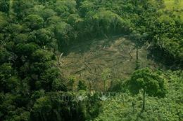 Áp lực phát triển kinh tế khiến 1 triệu loài sinh vật đứng trước nguy cơ tuyệt chủng