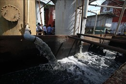 Nước sông ở Hậu Giang bị ô nhiễm do nhà máy đường xả thải