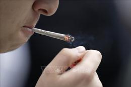 Thuốc lá - thủ phạm gây ung thư phổi hàng đầu tại EU