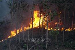 Cơ bản khống chế vụ cháy rừng tại Đức Phổ, Quảng Ngãi