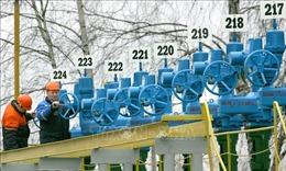 Nga điều tra 13 nghi can trong vụ gây ô nhiễm dầu đường ống Druzhba