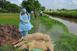 Ngành nông nghiệp kiểm tra việc phòng, chống dịch tả lợn châu Phi