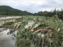 Bình Thuận khẩn trương khắc phục thiệt hại do mưa lũ