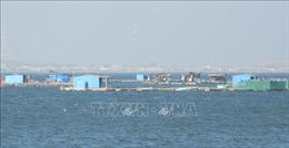 Xử lý dứt điểm hơn 100 lồng bè án ngữ ở biển Bình Sơn