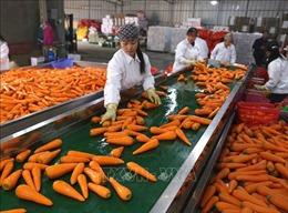 Thúc đẩy hợp tác thương mại giữa Việt Nam -Trung Quốc