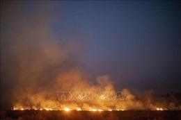 Cảnh báo cháy rừng Amazon có thể ảnh hưởng tới nhiệt độ toàn cầu