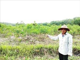 Điều tra vụ chặt phá 5,8 ha rừng trồng tại Khu rừng Văn hóa - Lịch sử Chàng Riệc