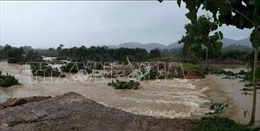 Đồng Nai mất trên 5.000 tấn cá do mưa lũ