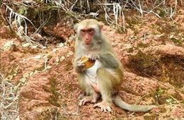 Tuyệt đối không dụ khỉ đến gần bằng bánh kẹo để tránh bị tấn công
