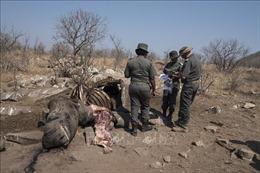 Nam Phi bắt giữ số lượng kỷ lục 367 nghi phạm săn trộm tê giác
