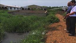 Yêu cầu các trại nuôi lợn chấp hành nghiêm quy định về môi trường