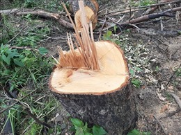 Khởi tố vụ phá hơn 2 ha rừng lấy đất sản xuất ở Lâm Đồng