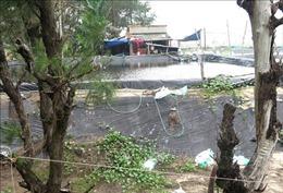 Nhức nhối rừng dương phòng hộ bị xâm chiếm để nuôi tôm