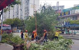 Triều Tiên nỗ lực khắc phục thiệt hại bão Lingling