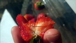 Australia tiếp tục tìm thấy kim khâu giấu trong dâu tây