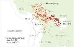 Hơn 2,1 triệu ha rừng Bolivia bị lửa tấn công