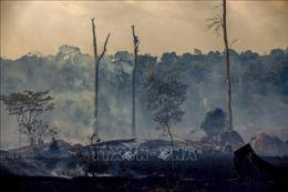 Cộng đồng quốc tế cam kết viện trợ 500 triệu USD để bảo vệ rừng nhiệt đới