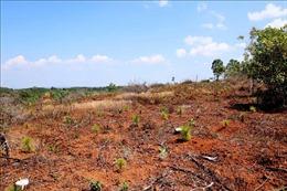 Nhiều sai phạm tại dự án đầu tư sản xuất nông lâm nghiệp tại huyện Tuy Đức, Đắk Nông