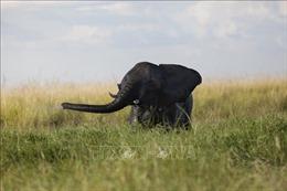 LHQ ứng dụng công nghệ mới vào quản lý buôn bán động vật hoang dã