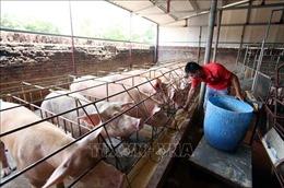 Giá lợn hơi tăng cao 56.000 - 57.000 đồng/kg