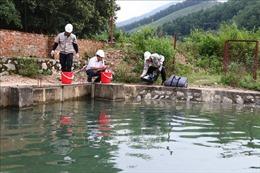 Hòa Bình khẩn trương xử lý ô nhiễm nguồn nước sạch sông Đà