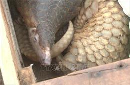 Quảng Trị bắt giữ vụ vận chuyển động vật hoang dã quý hiếm