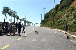 Đảm bảo an toàn cho du khách tham quan bán đảo Sơn Trà