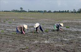 Lịch lấy nước gieo cấy lúa vụ Đông Xuân 2019 - 2020