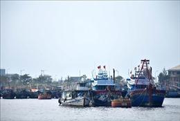 Bảo đảm an toàn tại Âu thuyền Cảng cá Thọ Quang và khu vực bán đảo Sơn Trà