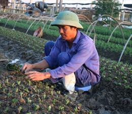 Sản xuất nông sản an toàn theo tiêu chuẩn VietGAP cho hiệu quả cao
