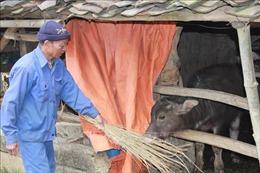 Chủ động phòng chống đói, rét cho vật nuôi