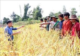 Gia Lai: Hướng tới phát triển các sản phẩm đặc trưng vùng cao