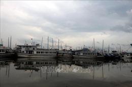 Quảng Ninh và Hải Phòng đề phòng nước biển dâng kết hợp triều cường do bão số 3