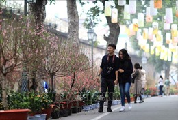 Chợ hoa níu chân khách du xuân phố cổ Hà Nội