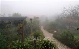 Lào Cai rét đậm rét hại, khu du lịch Sa Pa lạnh 5,2 độ C