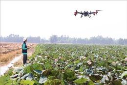 Phun thuốc bảo vệ thực vật bằng thiết bị bay không người lái