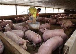 Tăng kiểm soát chi phí trung gian, xử lý nghiêm nạn đầu cơ, đẩy giá thịt lợn lên cao