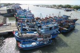 Ninh Thuận nỗ lực hoàn tất gắn thiết bị giám sát hành trình cho 100% tàu cá trong tháng 4/2020