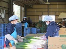 Nhật Bản tiếp tục hỗ trợ thực tập sinh nước ngoài