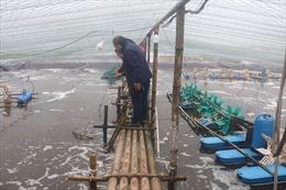 Hợp tác Việt-Bỉ phát triển nuôi tôm sạch tại Kim Sơn
