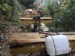 Giao Công an tỉnh điều tra vụ phá rừng ở Đăk Tô, Kon Tum