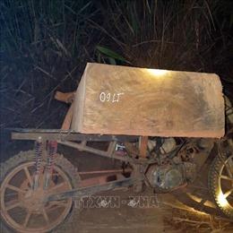 Kon Tum tiếp tục bắt giữ 'đoàn xe lâm tặc'chở gỗ lậu